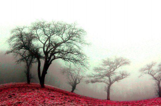 misty-dreams-by-weirena