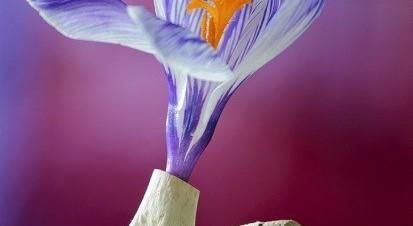 Flowers & Bone