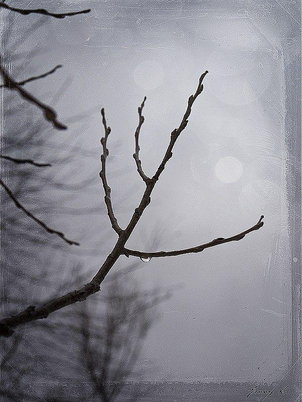 Tristesse by Jenny Lynne
