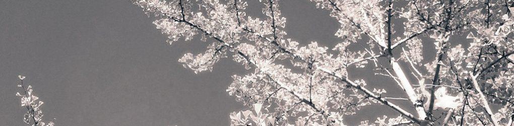 Iluiteq * Hirotaka Shirotsubaki * Clearlight & Owl